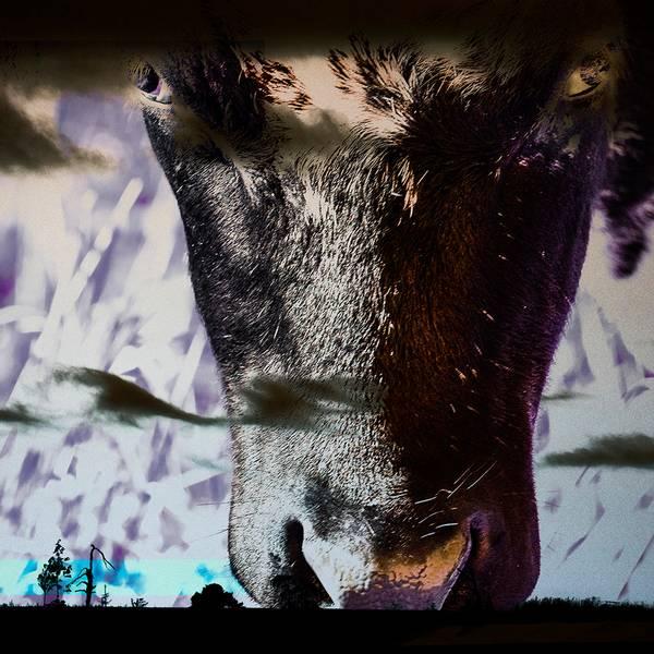 Bilde av Cow 20 x 20 cm Nr 26 BLÅ