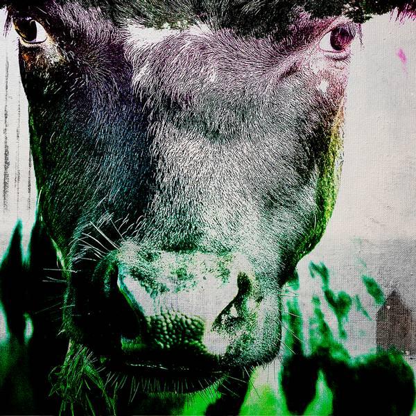 Bilde av Cow 20 x 20 cm Nr 14       -